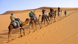 Arabian Camel Safari Tour